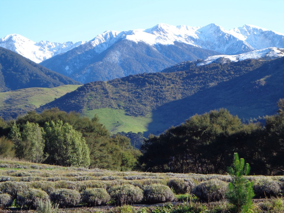 Snow on the Tararua Ranges