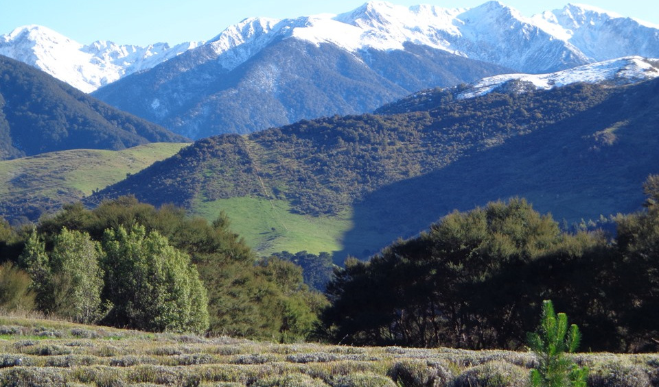 Snow on the Tararua Ranges - the view from Lavender Magic