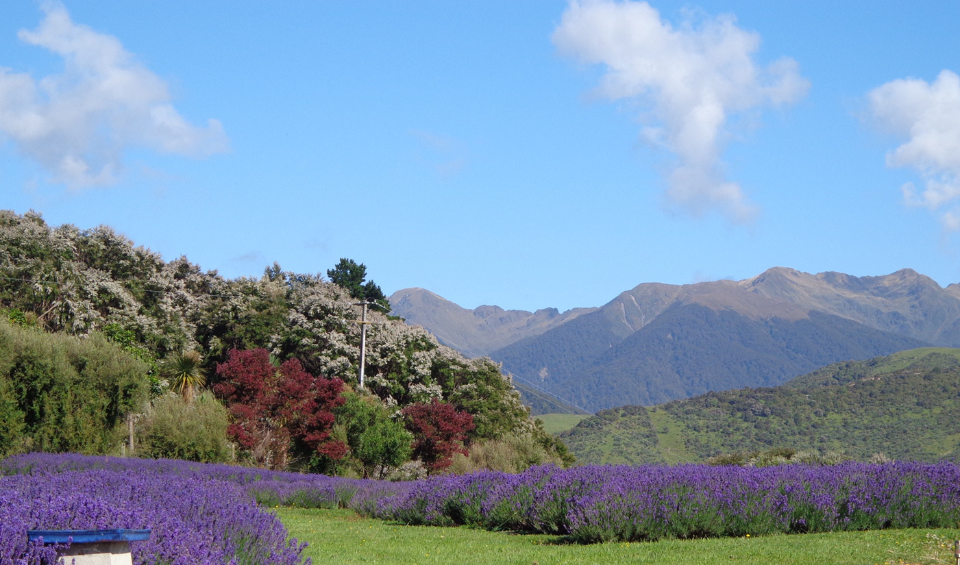 Lavender Magic New Zealand