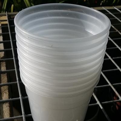 10 X 12cm Diameter Transparent Orchid Pots