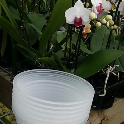 10 X 15cm Diameter Transparent Orchid Pots