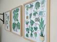 17 Indoor Plants A3 Print