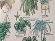 17 Indoor Plants A4 Print