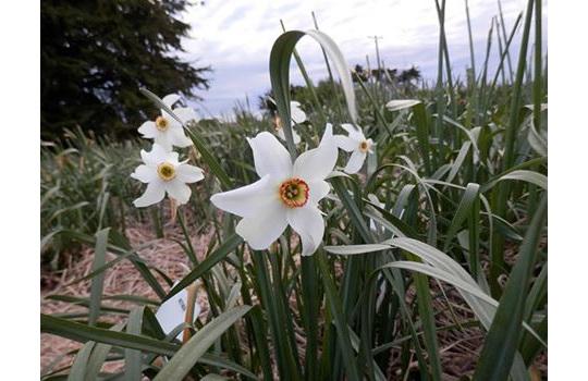 Still flowering in the paddocks