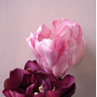 Tulip - large 1138 burgundy 1137 pink