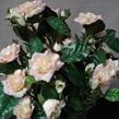 Rose bush, mini 1008