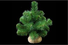 30cm pine look tree w/burlap