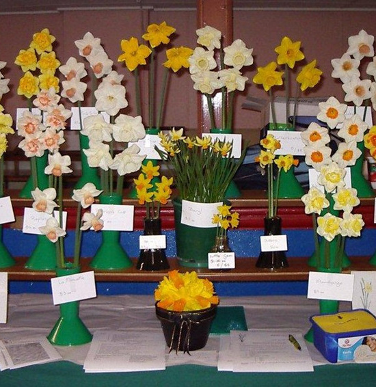 Mercervale Daffodils Trade Stand