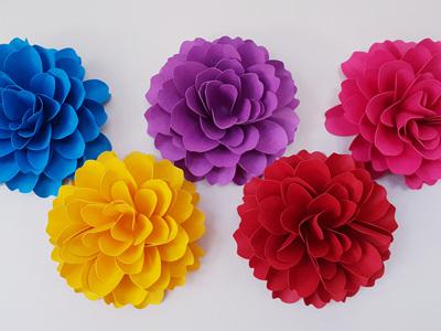 5 small Dahlia flowers