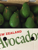 Catering Grade Avocado 10kg Carton