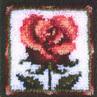 CA4808   Pink Rose