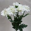 Chrysanthemum spray 1130/1131