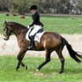 Green to Dressage