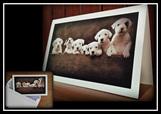 Puppy cards - Matilda's