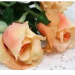 Rose Tiffany 1079