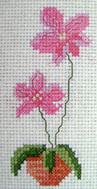 DMCT884K  Rose Orchid