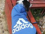 Adidog hoodie - Blue