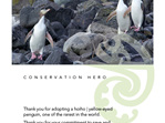 Adopt a Hoiho/Yellow-Eyed Penguin