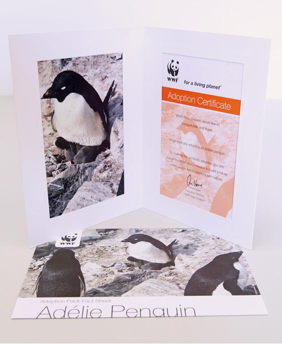 Adopt An Adelie Penguin Wwf New Zealand Online Shop