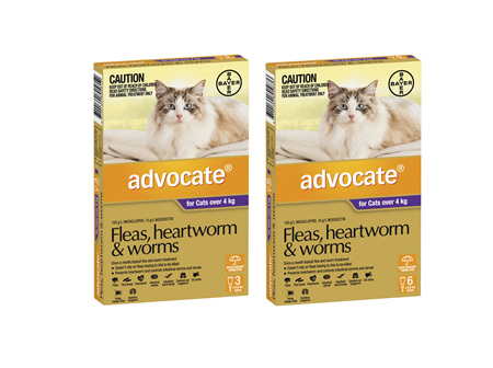 Advocate Cat Large 4kg+