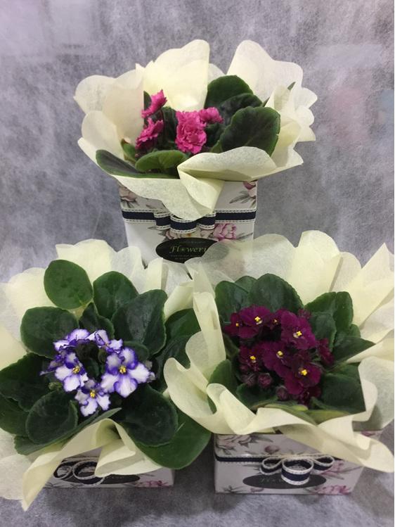 African Violets from Royal Oak Florist Flowerise