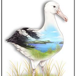Albatross Birds Eye View - A4 Print