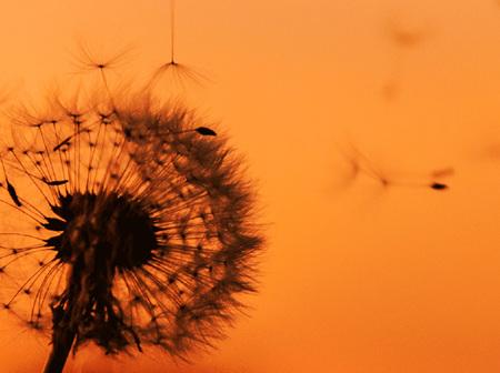 Allergy & Hay fever