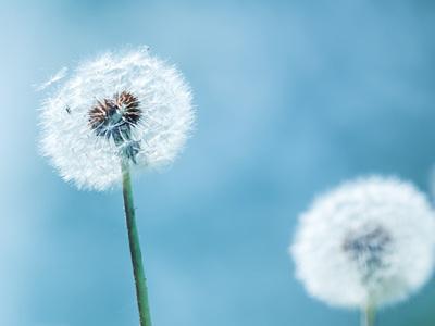 Allergy & Sinus