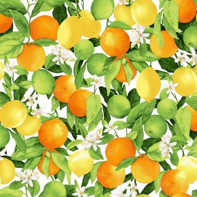 Ambrosia Farm - Citrus Grove Morning Light