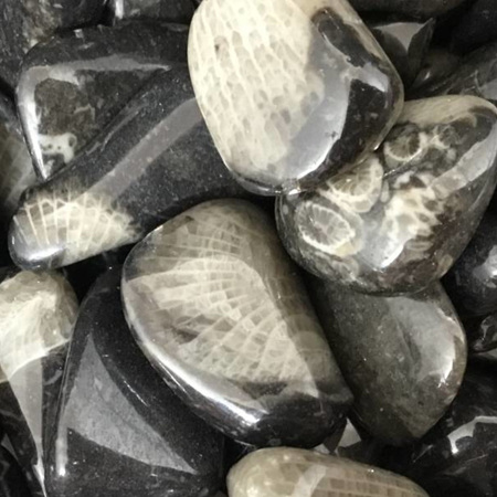 Ammonite Tumbled