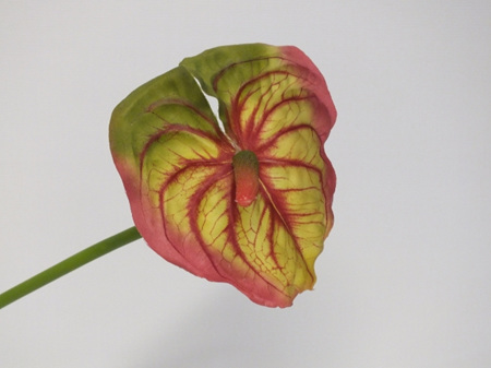 Anthurium Salmon 4090