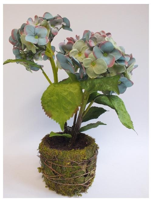 Antique Green hydrangea two flower heads in moss pot