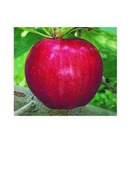 Apples Bostock Fuji Certified Organic 1kg