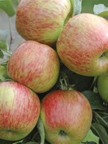 Apples Braeburn Certified Organic 1kg