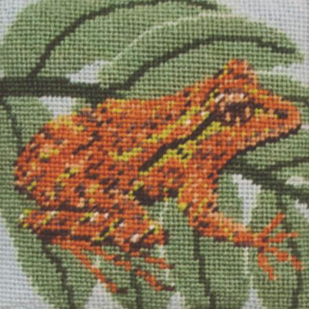 Archeys Frog Needlepoint Kit