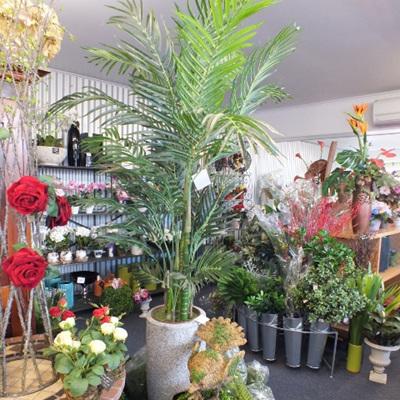 Areca Palm in Pot 1009