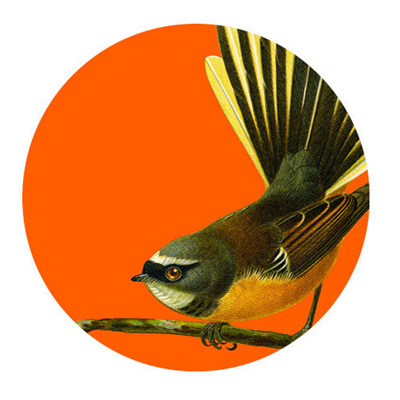 Art Spot - Native Birds