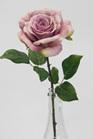 Rose English Lavender 4324
