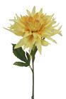 Dahlia Cactus Yellow 4322