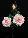 Rose Climbing 4103 Pink