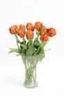 Tulip Parrot Orange 4459