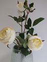 Rose English Cabbage 4431