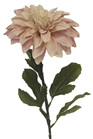 Dahlia Diva  Pink 4319