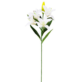 Lily Oriental White 4359