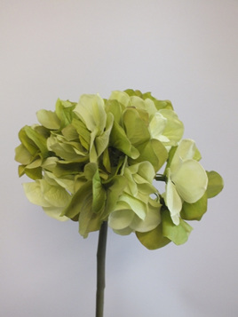 Hydrangea stem vintage green 1933