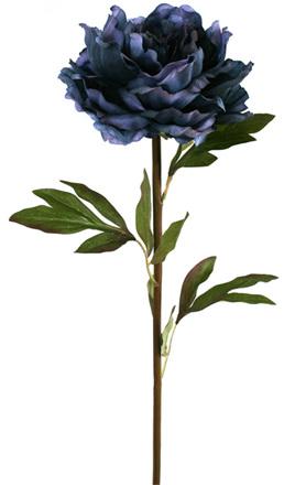 Peony  Blue 1869