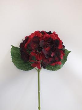 Hydrangea stem Dark red 1929