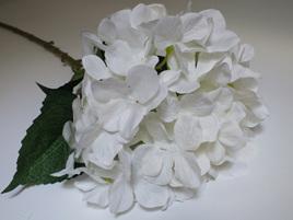 Hydrangea white 4377
