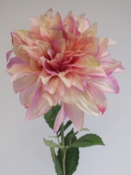 Dahlia pink 4218