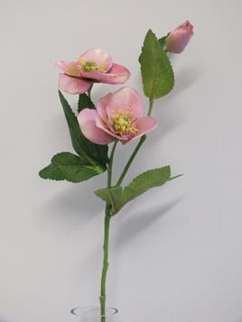Hellebore branch - pink 1964